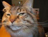 suspicious cat.jpg
